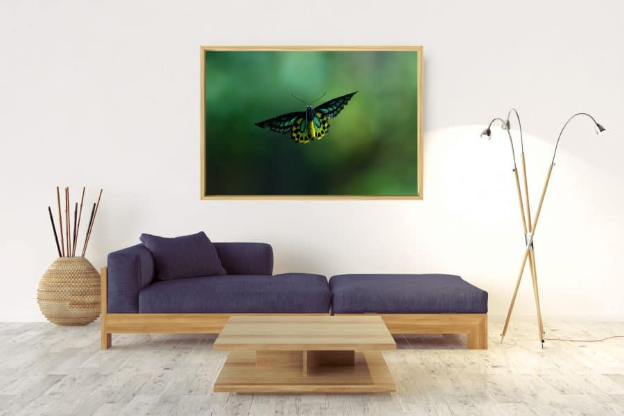 Butterfly-Box-Frame-(Raw)-No-Border