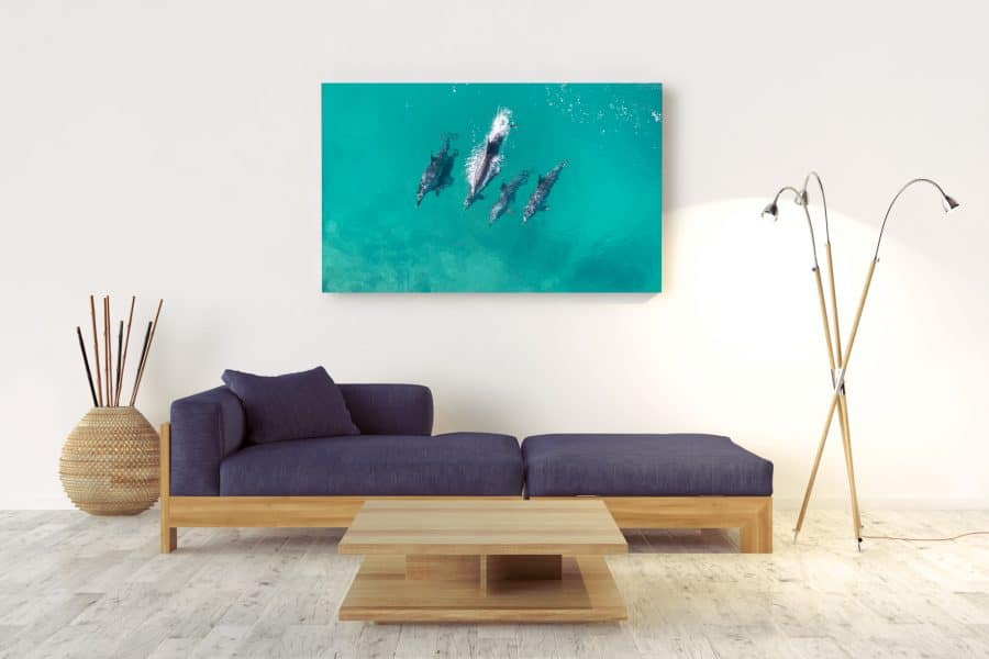 LOCALS-Acrylic-Wall-Mount--Dolphins